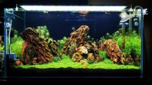 After Water Change by Ayong Go Philippines