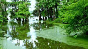 Bayou Marsh