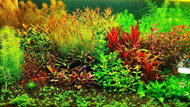 Dutch Style Bombarding CO2 for Plants (no Faunas) Aquascaped by Dennis Sancio Philippines