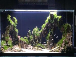 Hardscape Diorama Style 10 Days Old Aquascaped by Rowan Neal Lidres