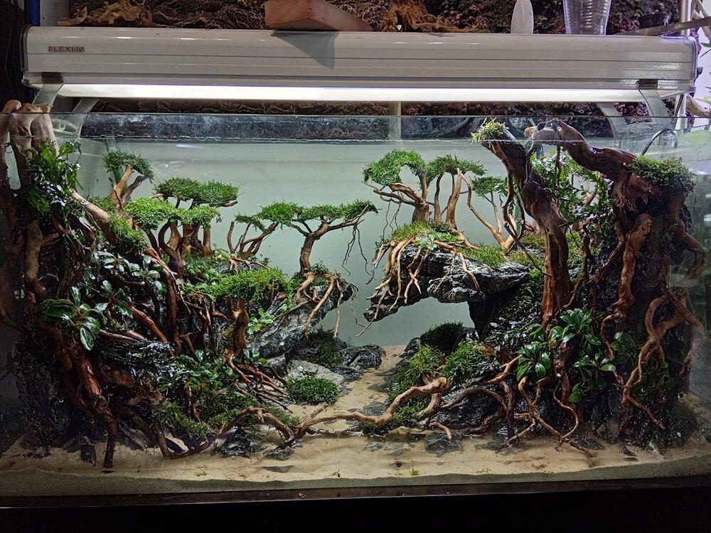 Hardscape Diorama Style Aquascaped by Edrian Corpuz Espiritu Philippines