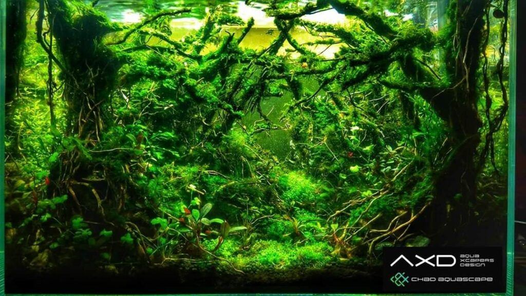 Hardscape Diorama Style Aquascaped by San Mig Chad Philippines Two
