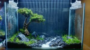 Hardscape Diorama Style Bonsai Aquascaped by Aristotle Quintana Comboy