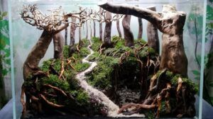 Hardscape Diorama Style During Setup Aquascaped by Pitch Gerald Gingco Loyola Philippines