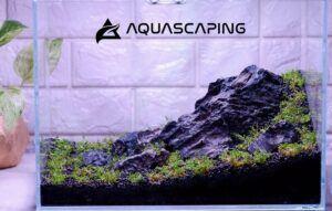 Iwagumi Style Aquascaped by Alfred Repani Estrella