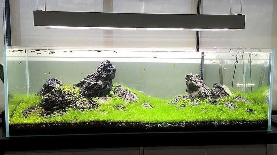 Iwagumi Style Done Aquascaped by Reimond Po Philippines