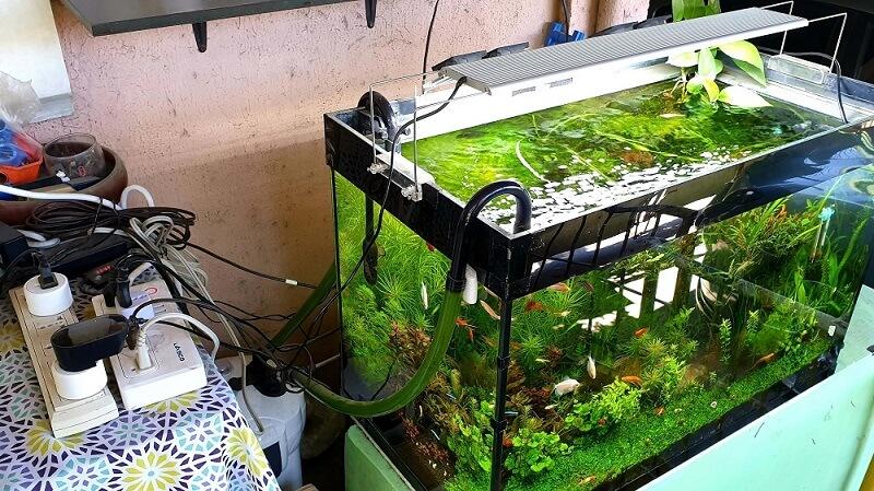 My Aquarium in our Terrace