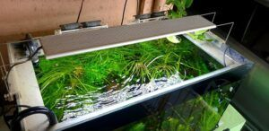 My Planted Aquarium in our Terrace with lots of Ventilation