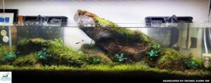 Nature Style 12 Gallons Long Aquascaped by Michael Yap Philippines