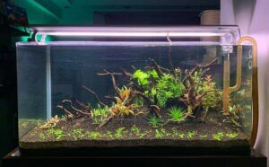 Nature Style Aquascaped by Algine Francis de Ramos Philippines