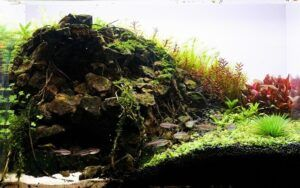Nature Style Aquascaped by Dah Real Philippines