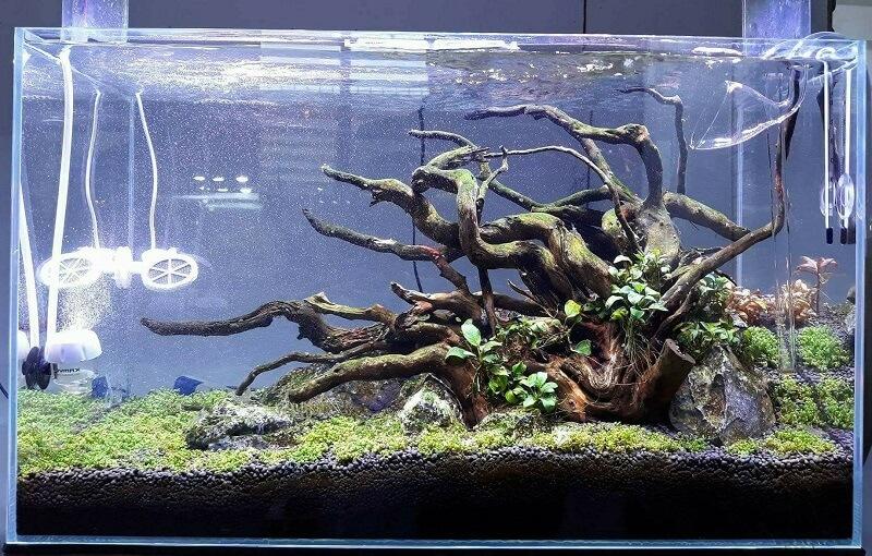 Nature Style Aquascaped by John Alfred Cezar Dafielmoto