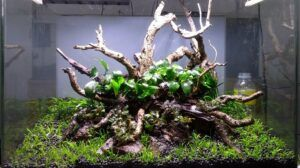 Nature Style Aquascaped by Pitch Gerald Gingco Loyola Philippines