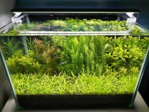 Walstad Tank No Filter Since Day 2 No CO2 Injection Aquascaped by Mark Ivan Suarez Philippines