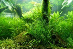 Nature Style Planted Aquarium Aquascaped by Fritz Rabaya Cebu Philippines