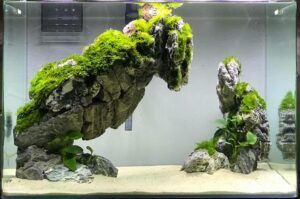 Using Purified Water Aquascaped by Rowan Neal Lidres Philippines