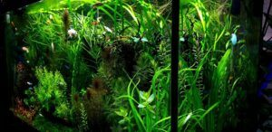 Using RO-DI Water Aquascaped by Lemuel Sacop Philippines
