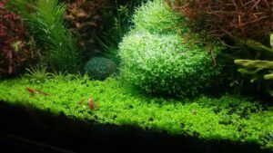 Using Stocked Tap Water Aquascaped by Omar Krishnan Afuang