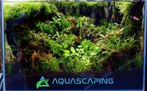 Using Tap Water Aquascaped by Alfred Repani Estrella Philippines