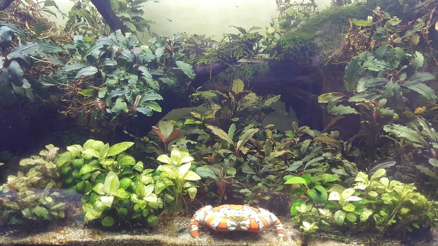 Using Tap Water Aquascaped by Ian Garrido Philippines