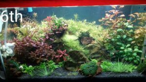 Using Tap Water Aquascaped by Kristopher Gagarin Philippines