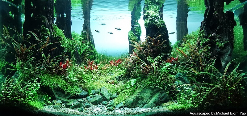Using Tap Water Aquascaped by Michael Yap Philippines