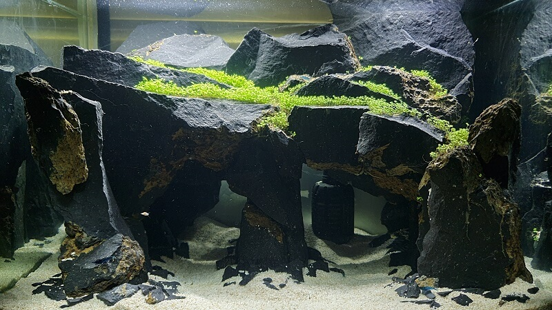 Using Tap Water Aquascaped by Ryan Ebarondo Philippines