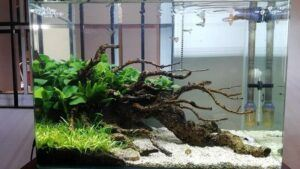 Using Tap Water Nature Style Aquascaped by Pitch Gerald Gingco Loyola