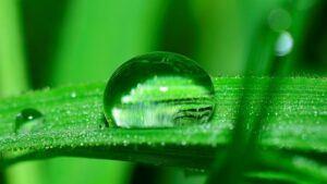 Water Drop on Grass After a Rain