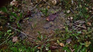 Water and Soil Absorption