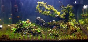 Added Some Tripartita Minis and First Trim of the DHG