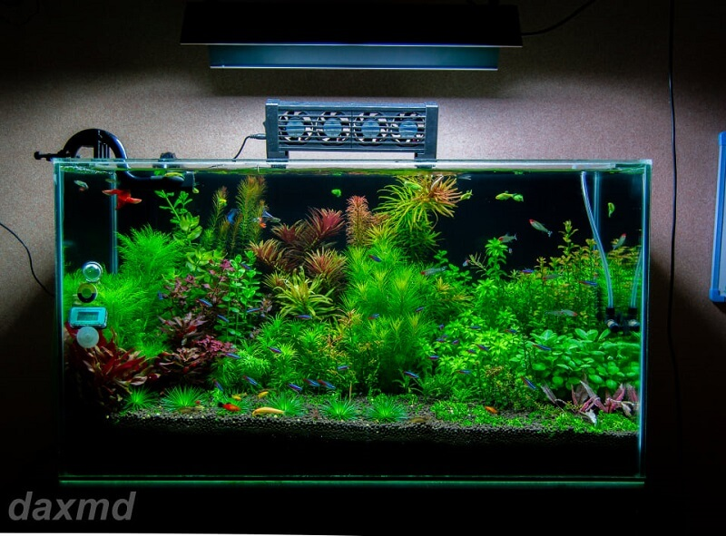 Dutch Style Aquascaped by Jose Santos Dacuycoy Philippines