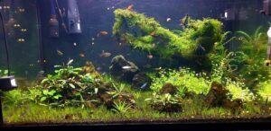 Planted the Tripartita Minis