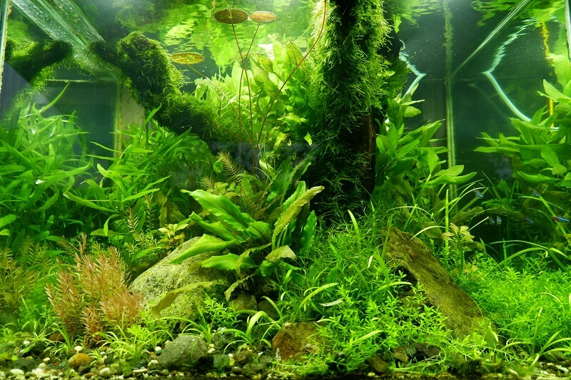 Updated Walstad Tank Using a Filter Aquascaped by Fritz Rabaya Philippines