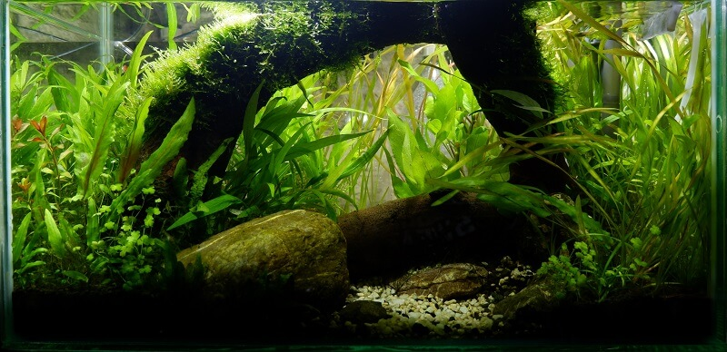 After - Jungle Style Aquascaped by Fritz Rabaya Philippines