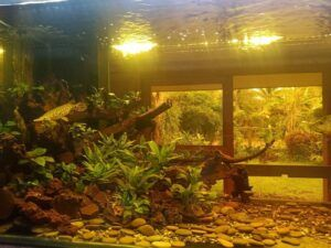 B3 Class Amazon Blackwater Biotope Aquascaped by Joseph Albert Braga Philippines
