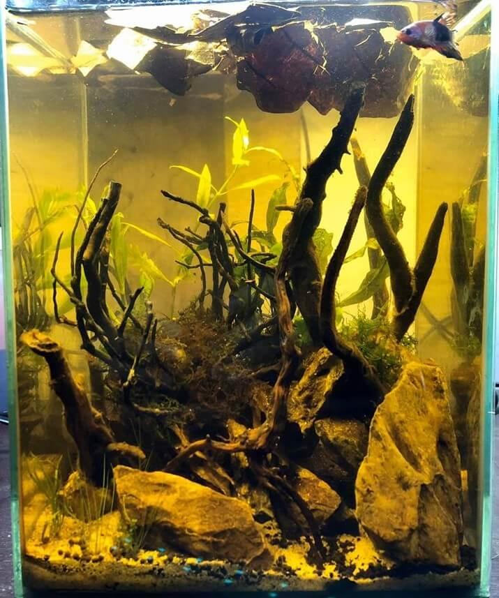 Blackwater Nano Tank for Betta Aquascaped by Doi Suason Philippines