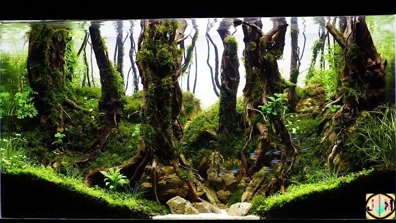 Hardscape Diorama Style Aquascaped by Jordy Midel Jr. Philippines
