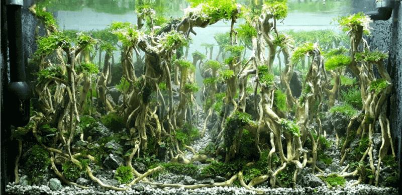 Hardscape Diorama Style Aquascaped by Payat Aquino Hernandez Philippines