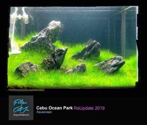 Iwagumi Style Aquascaped by Felipe Caballero Jr. Philippines