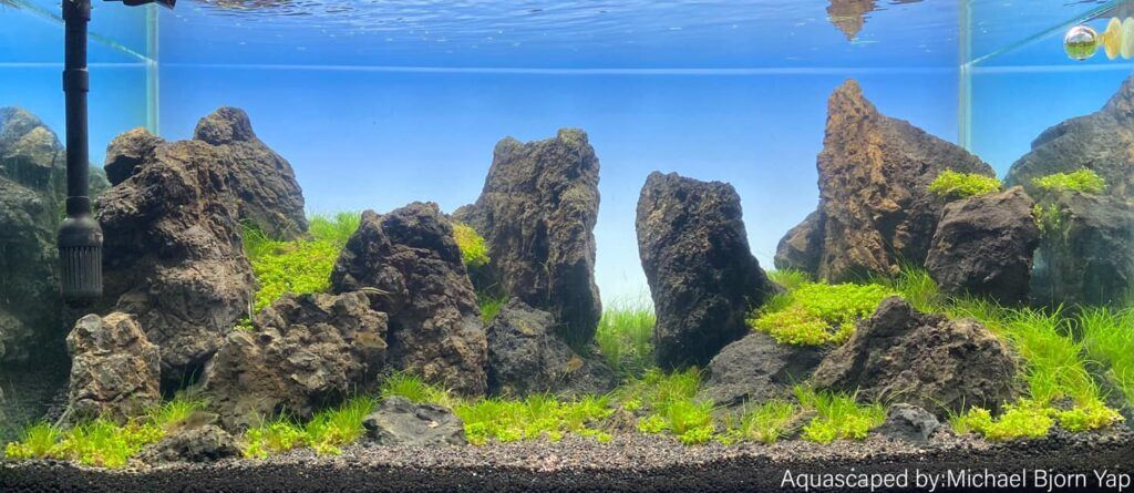 Iwagumi Style Aquascaped by Michael Yap Philippines