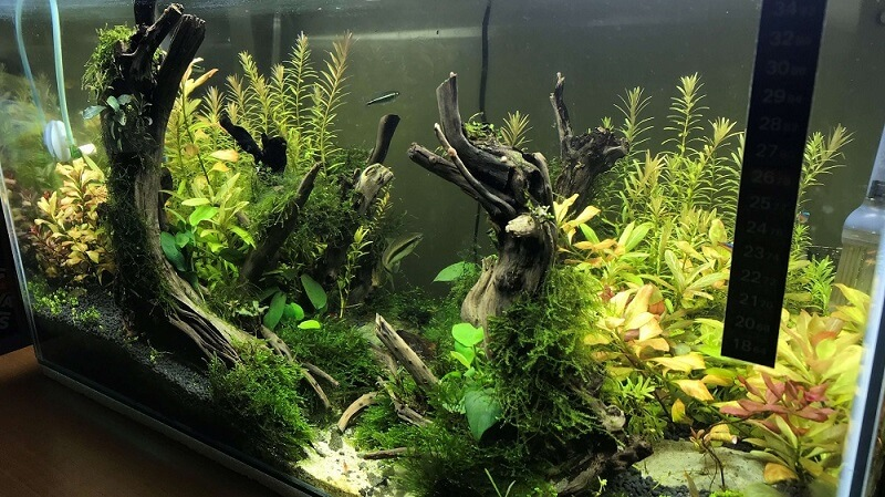 Nature Style 2 Aquascaped by Jeremy Navarro Philippines