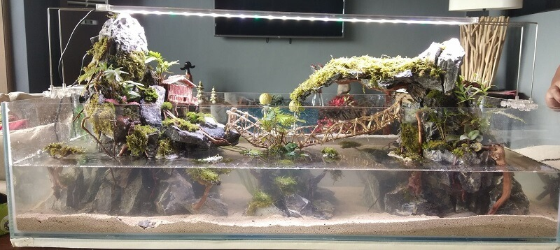Paludarium Newly Set-up with Waterfall by Aristotle Quintana Comboy Philippines