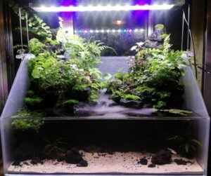 Paludarium by John Dustin Saints Victorino Philippines