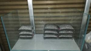 Raising the Aquascape by using Pumice Rocks on Mesh Bags by Pitch Gerald Gingco Loyola Philippines