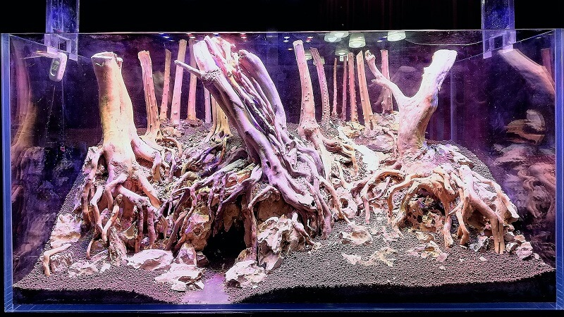 Raising the Aquascape by using Pumice Rocks on Mesh Bags Hardscape Done by Pitch Gerald Gingco Loyola Philippines