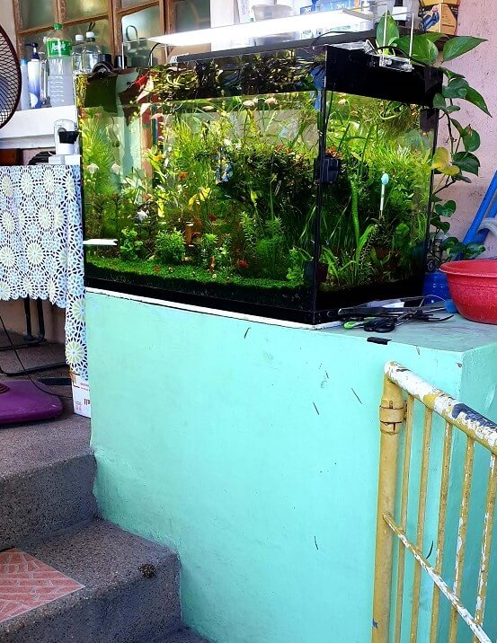 aquarium traffic