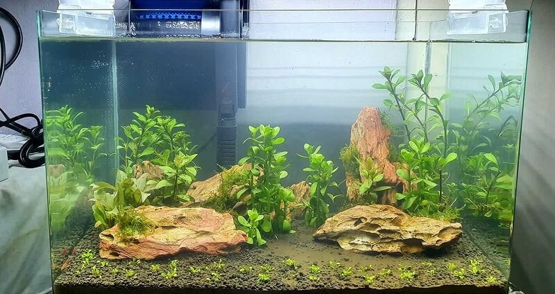 Fishless Cycling Aquascaped by Davy De Borja in the Philippines