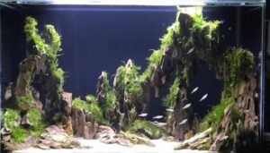 Hardscape Diorama Style 10 Days Old Aquascaped by Rowan Neal Lidres Philippines