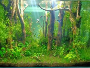 Hardscape Diorama Style Using Tap Water and Anti-Chlorine Aquascaped by Khristoffer Alcaraz Philippines